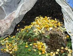 蚯蚓是有機堆肥的第一把交椅,省電省能源!