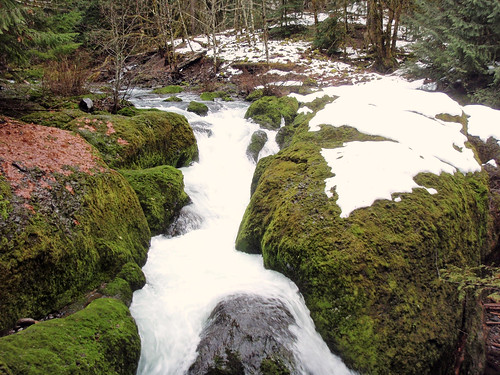 Flows like this now mimic a natural river system throughout the seasons of the year. This water release expands habitat for fish but also could mean great things to the entire ecosystem. (U.S. Forest Service photo)