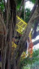 鄭彩鑾加入上樹守護