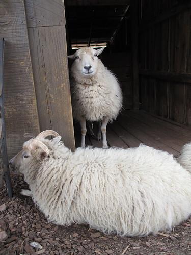 Tanglewood Farm 0159