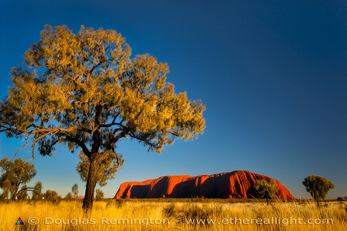 Uluru and desert oak, Australia by Douglas Remington - Ethereal Light® Photography
