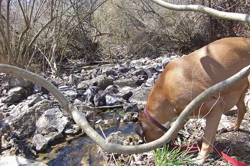 olive explores creek 027