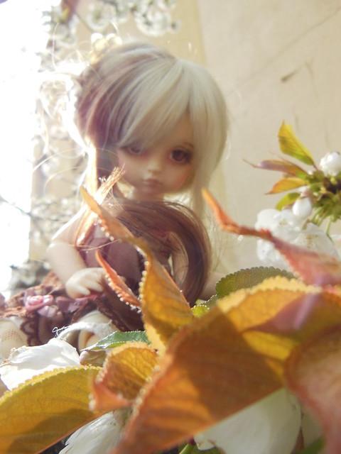 [Toulouse] Résine et fleurs de cerisier 8629624856_e5ecd617e8_z