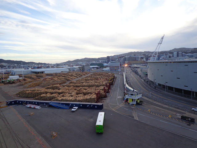wellington-harbour-pine