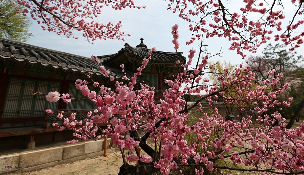 Korea_Palace_Spring_Flowers_09