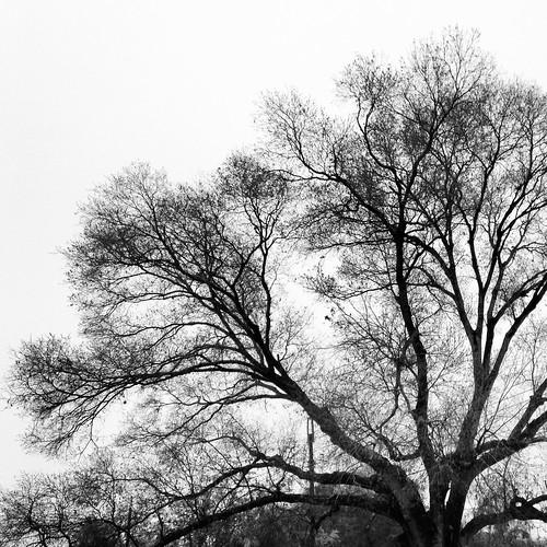Grey (46/365) by elawgrrl