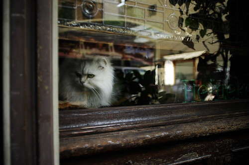 a cat in a showcase