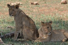 8487284020 6fd58c7072 m Bottom line: The Trip was Magnificent. Thomson Safaris Review: Bob D.