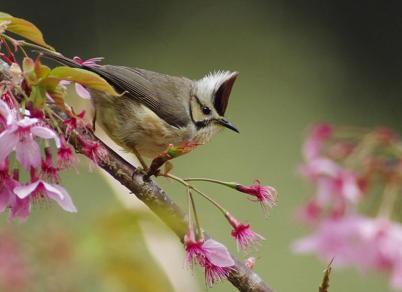 杉林溪打鳥之 ~ 鳥很多打不到篇...