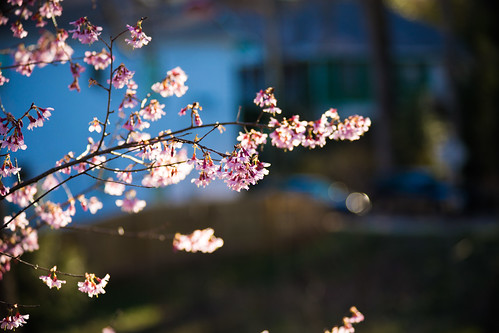 An Early Touch of Spring in Atlanta by bump