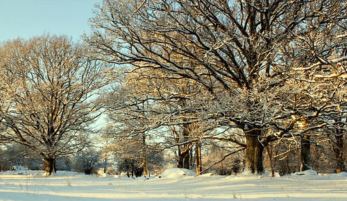 wood blue trees winter light sky favorite sun white inspiration snow cold tree art nature beautiful beauty weather composition digital forest canon woodland season landscape photography evening frozen photo oak woods scenery warm flickr frost december afternoon seasons view image sweden snowy earth scenic picture sunny frosty best foliage photograph scenary freeze views frame land imagination sverige dslr oaks winterland province comments comment 2012 flickrfriday lostinthewoods 550d timlindstedt