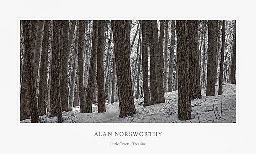 Treeline BW by Alan Norsworthy