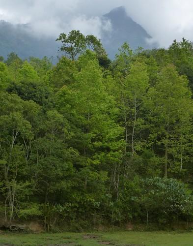 Hainan13-Wuzhishan-Montagne (83)