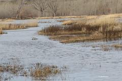 McNary Wildlife Refuge, Wallula Unit