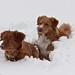Ares and Teya in the Snow by vjmurphy