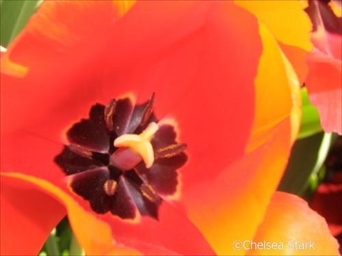 Flower. ©ChelseaStark http://www.chelseastarkphotography.com by chelseastarkphotography.com