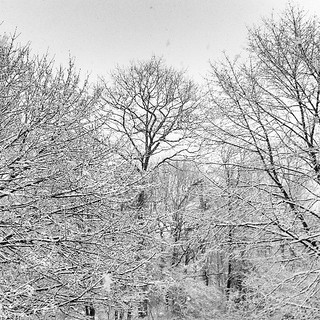 Snow day....