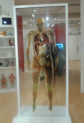 Full size diagram of male body at the Wellcome Trust in London