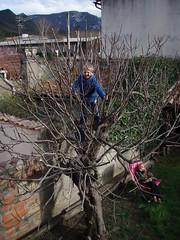 Max the tree climber