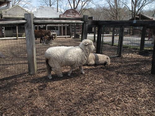 Tanglewood Farm 0026
