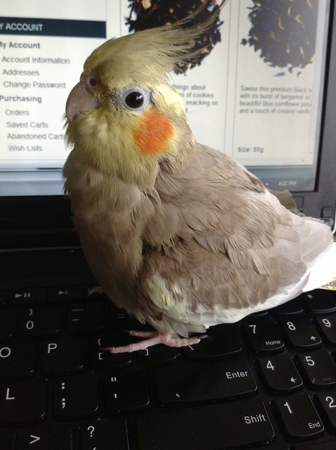 Sin when she isn't try to peck on my keyboard or screen