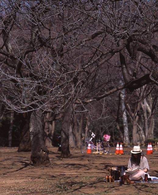 春目前の林