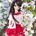 Lily in Sakura