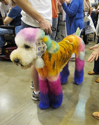 Poodle showing off her mama's grooming skills at the Pet Expo!
