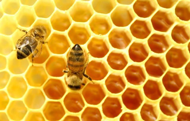 abejas-miel-diarioecologia