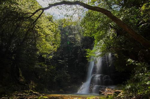 new green leaves japan waterfall 日本 shimane 滝 新緑 ニコン 島根県 邑智郡 赤馬滝