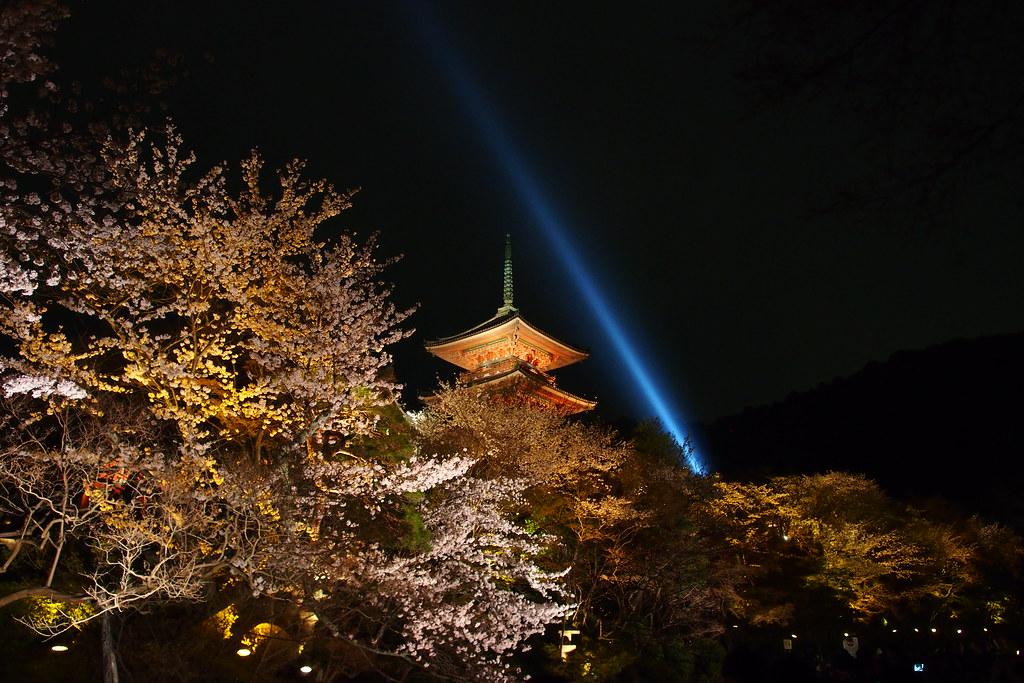 清水寺 夜櫻
