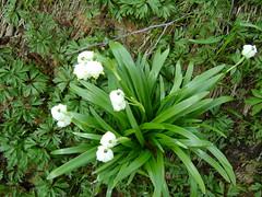 o nouă primăvară.../a new spring...