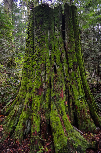 <p>Camosun Bog, Vancouver, British Columbia, Canada<br /> Nikon D5100, 18-55 mm f/3.5-5.6<br /> April 13, 2013</p>