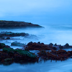 Tue, 06/14/2011 - 19:33 - Fog settles on the rocky intertidal in Oregon. Photo:  PISCO/Cook
