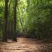 La Nana Creek Trail