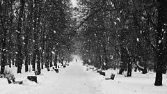 winter at last
