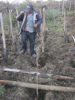 Riccardo planting poles