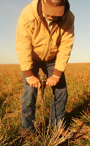 Byers, Tex. farmer Tommy Henderson inserts a soil pressure probe in his no-till dryland wheat field to test how loose his soils are and for soil moisture. The full length of this two-foot probe easily goes into the soil.