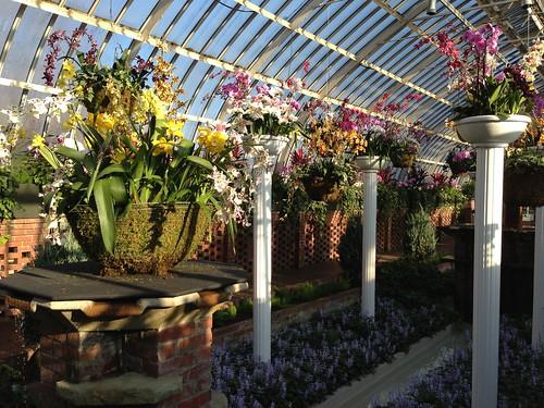 Columnar Plants