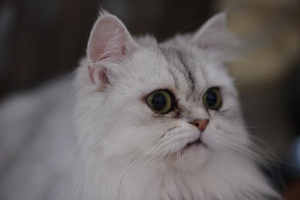 貓咪_毛毛和球球
