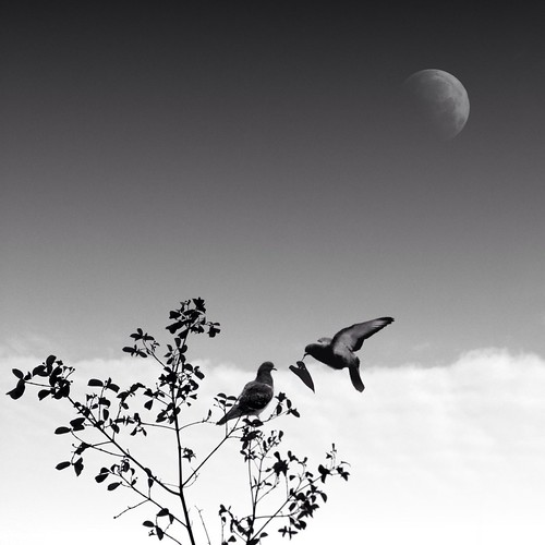 Bird pic #12
