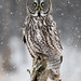 Great Gray Owl in Snow Fall by Bill McMullen