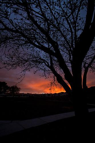 city travel red sky usa southwest color tree silhouette america landscape desert nevada noflash boulder usaamerica besttravel ilobsterit