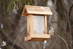 bluebird(0.0), lighting(0.0), branch(1.0), wood(1.0), birdhouse(1.0), bird feeder(1.0), bird(1.0),