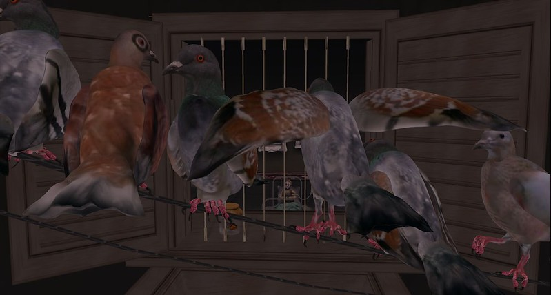 Immersiva - pigeons