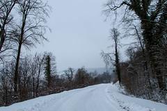 Balade dans la neige - Petite route en forêt