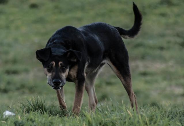 Header of animal instinct