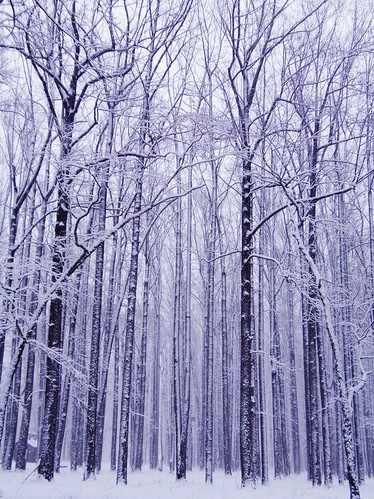 trees winter usa snow nature forest landscape woods pa buckscounty washingtonscrossing solebury