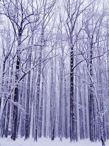trees winter usa snow nature forest landscape woods pa buckscounty washingtonscrossing solebury