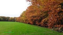 Autumn Foliage in the forest of Driebergen, Netherlands - 0960